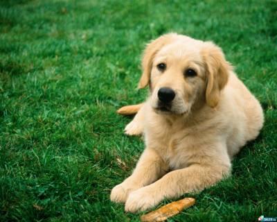 Собака — розумний і вірний товариш - цікаве про тварин