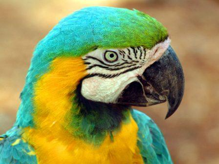 Папуга - екзотичний базіка - цікаве про тварин