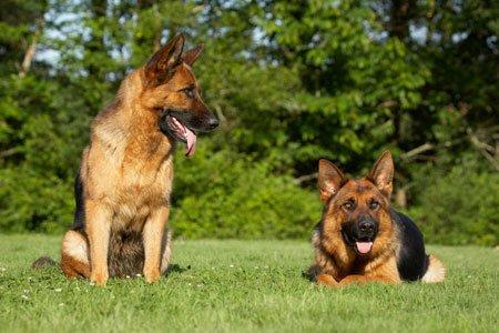 Лікуємо отруєння у собак - цікаве про тварин