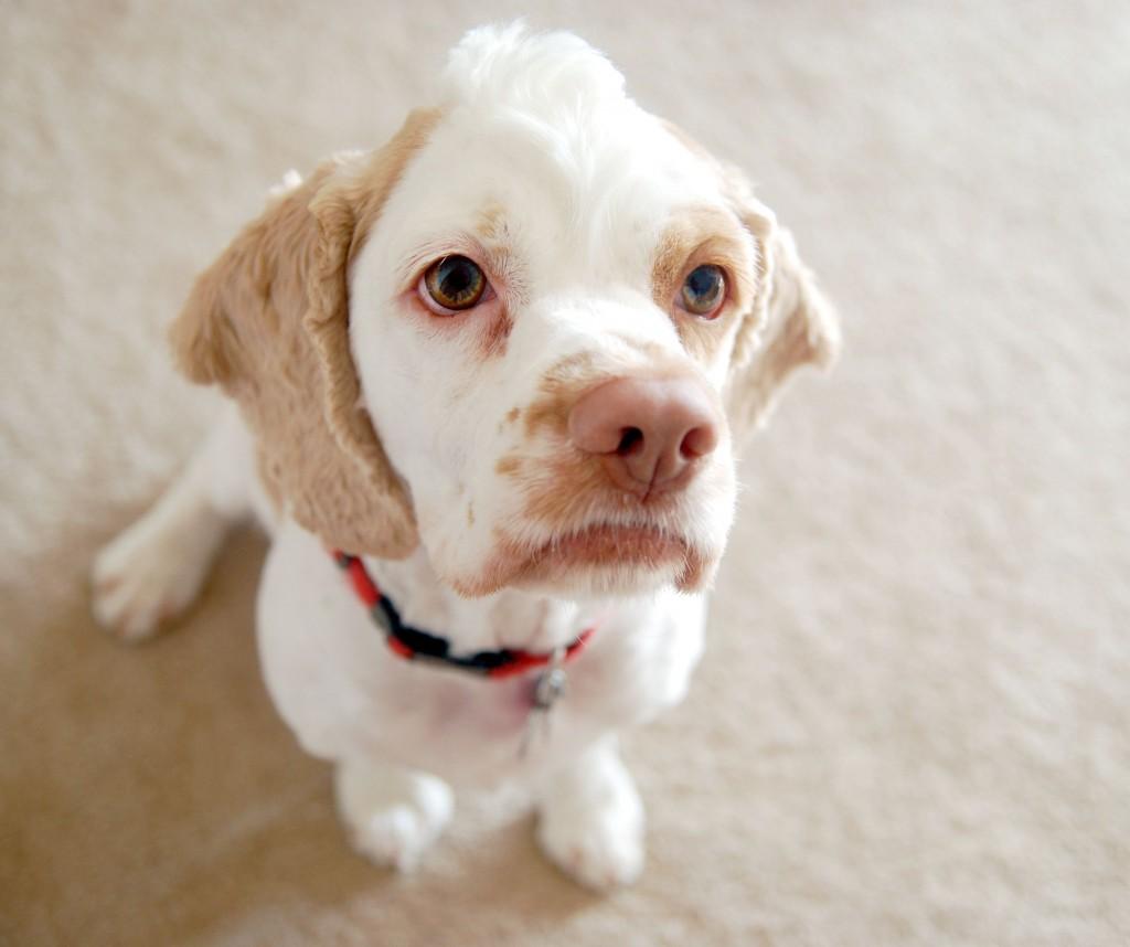 Болі в животі у собак - цікаве про тварин
