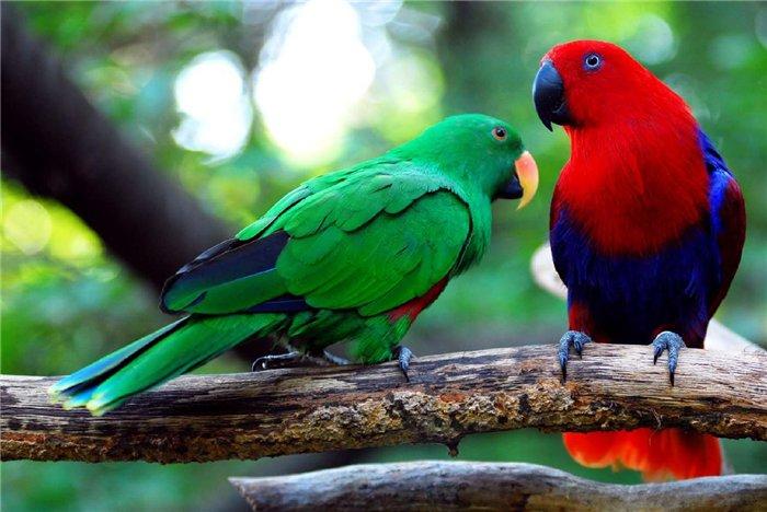 Вибираємо великого папуги - цікаве про тварин