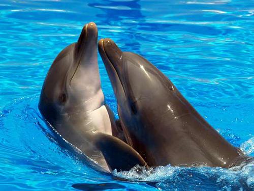 Дельфін потрапив у пастку - цікаве про тварин