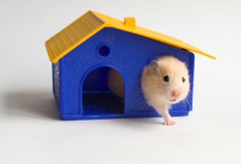 Как дом для хомяков - Госветклиника - выезд ветеринара на дом круглосуточно