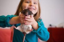 Як грати з пацюком - цікаве про тварин
