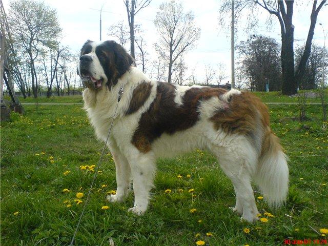 Команди для собак - цікаве про тварин