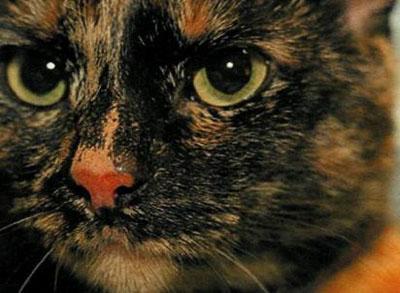 Кошмар кішки Тіллі - цікаве про тварин
