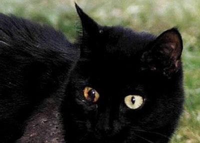 Кіт Арчі і його 50 дробинок - цікаве про тварин