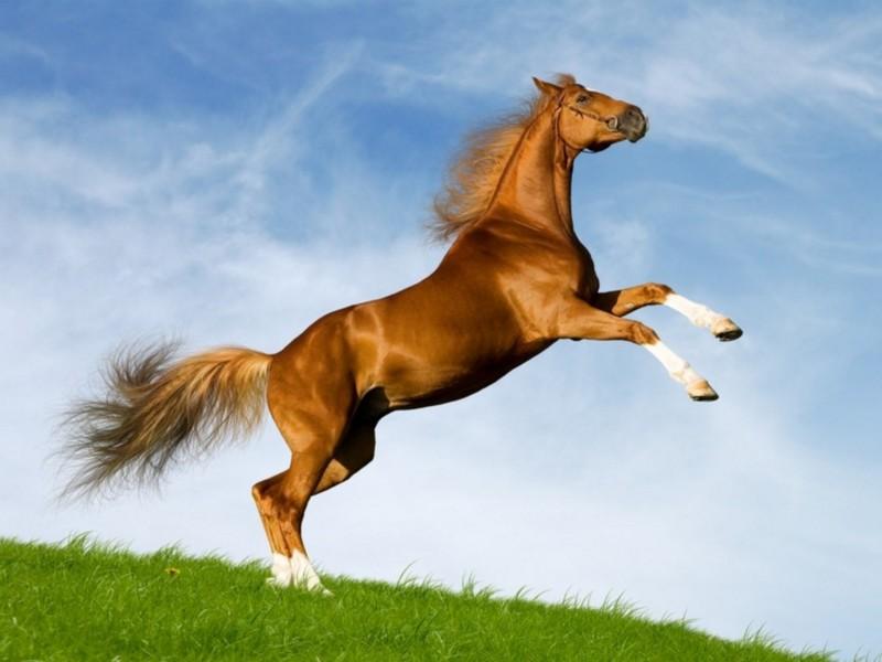 Кінь — століттями поруч з людиною - цікаве про тварин