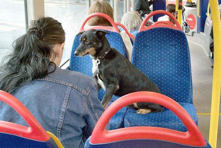 В поїздку з собакою - цікаве про тварин