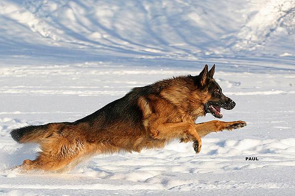 Втрата ваги у собаки - цікаве про тварин