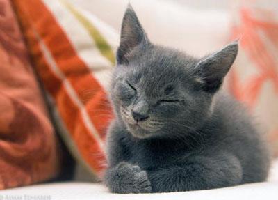 Поведінку кішок - цікаве про тварин
