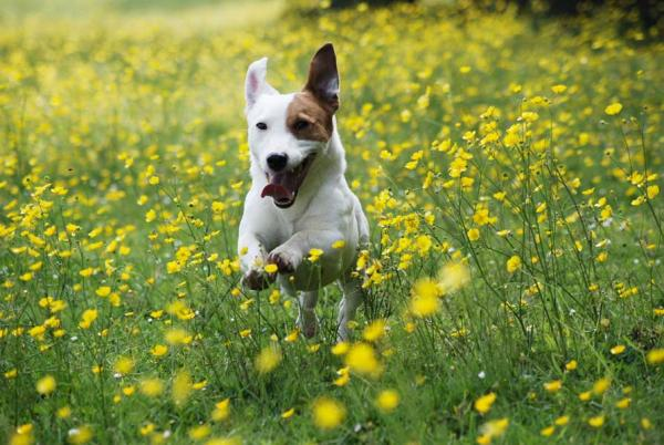 Проблеми поведінки собак - цікаве про тварин