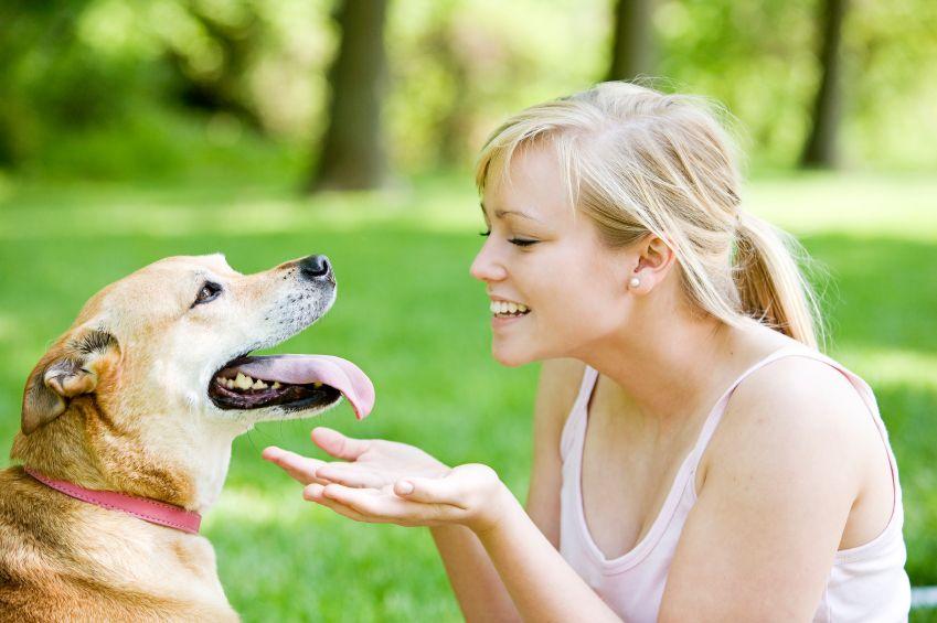 Наводимо собаку додому - цікаве про тварин