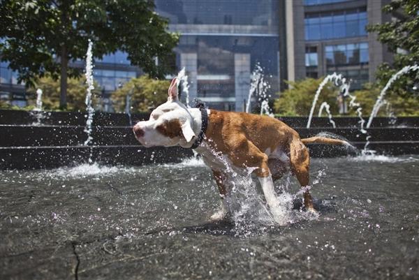 Собака в спеку - цікаве про тварин