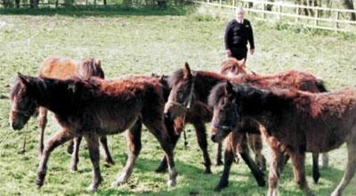 Своєчасна допомога кинутим поні - цікаве про тварин