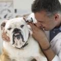 Курс молодого ветеринара