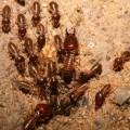 Термиты — трудолюбивые насекомые