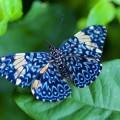 Бабочки — наши любимые насекомые