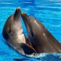 Дельфин — общительное млекопитающее