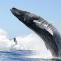 Кит — гигантское морское млекопитающее