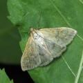Мотылек — не путать с бабочкой
