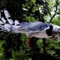 Орел - хищник с острым клювом и мощными когтями