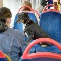 В поездку с собакой