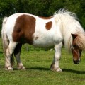 Поле для пони