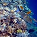 Помацентры — тропические морские рыбы с дурным характером