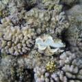 Устрицы — группа двустворчатых моллюсков