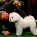 Участвуем в собачьей выставке