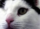 Больная раком кошка находит себе новый дом