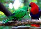Выбираем крупного попугая