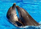 Дельфин попал в западню
