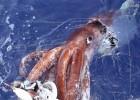 Гигантский кальмар — чудовище морских глубин