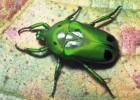 Жуки — самые разнообразные на планете