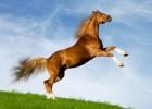 Лошадь — веками рядом с человеком