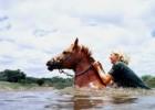 Лошадь выжила в бушующей реке