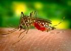 Москит — крошечное назойливое насекомое