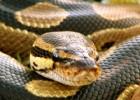 Змея, которая чуть не стала бельем