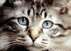Приз для самой невезучей кошки
