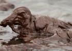 Спасаем птиц погрязших в нефти