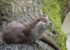 Выдра — млекопитающее, живущее и в воде, и на суше