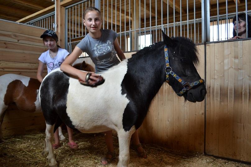 Догляд за поні - цікаве про тварин