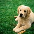 Собака — умный и верный товарищ