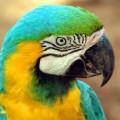 Попугай - экзотический болтун