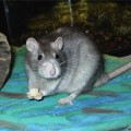 Дом для крысы