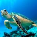 Черепаха — рептилия с домом на спине