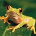 Лягушки — прыгучие амфибии