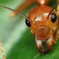 Муравьи — трудолюбивые насекомые, живущие огромными семьями